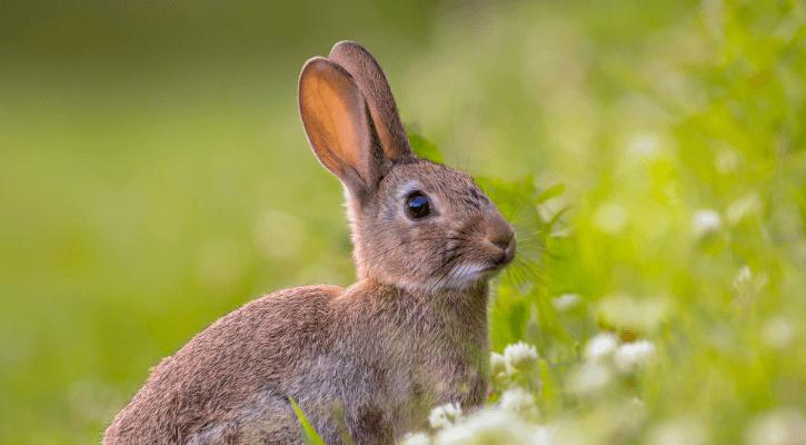 Rabbits & Small Mammals