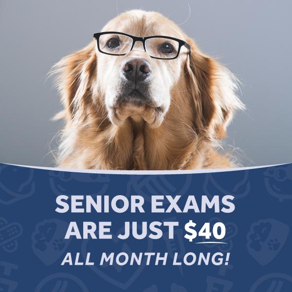 Senior Special